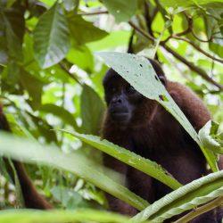 Wat is er mis met palmolie en waar zit het in?