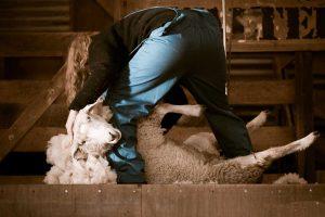 waarom-draagt-een-vegan-geen-wol