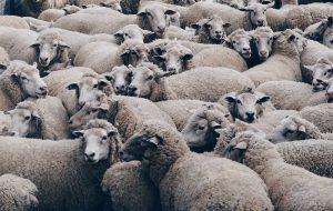 waarom-dragen-vegans-geen-wol