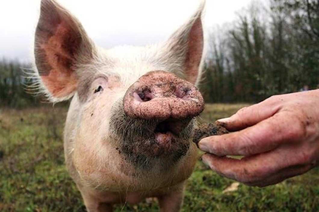 zijn-truffels-vegan