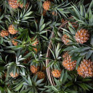 vegan-materiaal-ananasleer