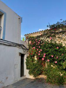 ibiza oude stad bloemen