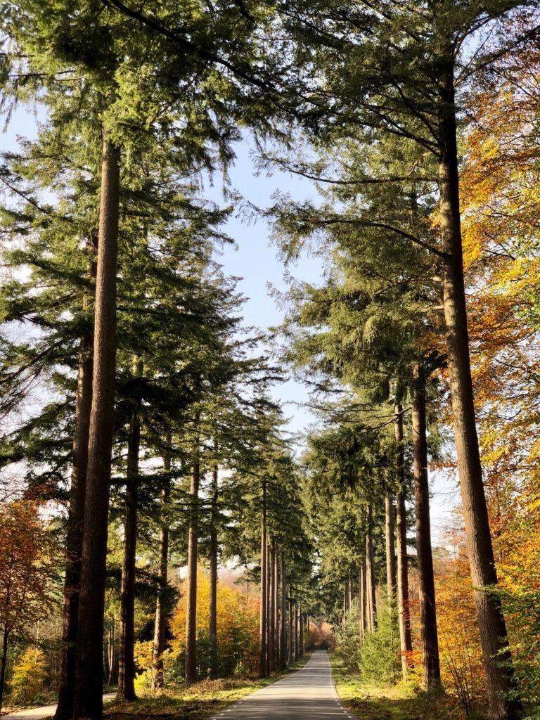 innerlijke rust bos